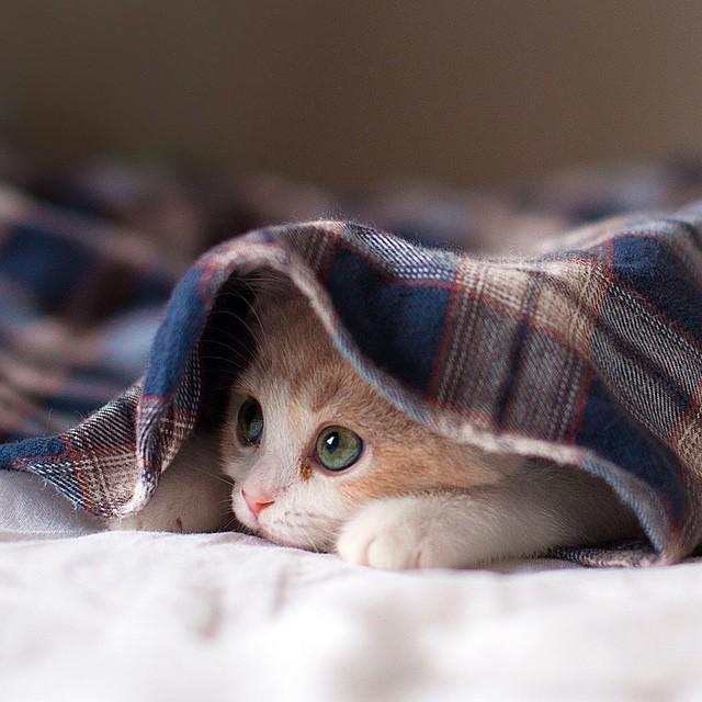 10 cose assurde che tutti i gatti fanno e che fanno for Animali con asciugamani