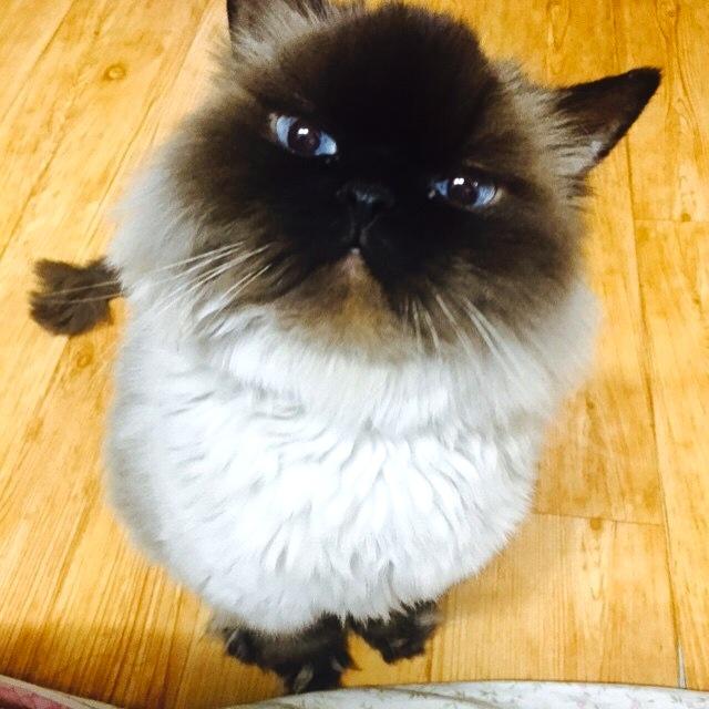 10 cose assurde che tutti i gatti fanno e che fanno for I gatti mangiano le tartarughe
