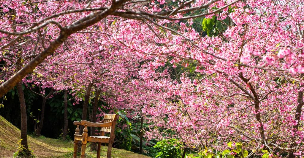 Le foto della fioritura dei ciliegi a tokyo radio deejay - Foto della bandiera del giappone ...