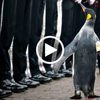 Da mascotte a comandante: il pinguino Olav passa in rassegna 50 soldati
