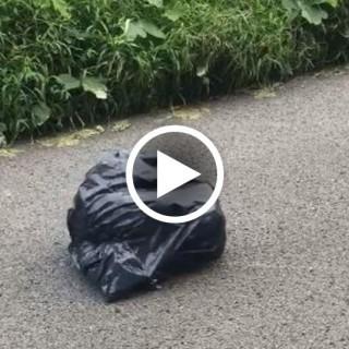 Il sacco della spazzatura si muove: una donna lo apre e resta senza parole