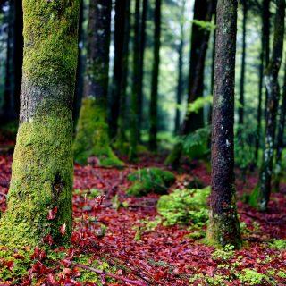 Vivere in contatto con il verde tiene alla larga la depressione
