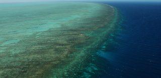 La Grande Barriera Corallina è morta: il bianco ha preso il posto del paradiso di colori