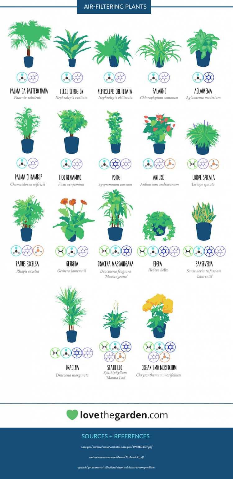 Inquinamento in casa piante che purificano l 39 aria radio - Zimmerpflanzen liste ...