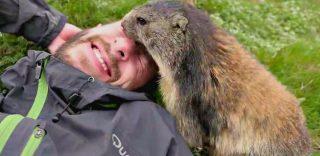 La marmotta vince la proverbiale timidezza e fa le coccole all'alpinista