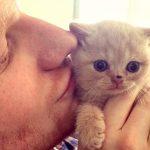 """Il migliore amico dell'uomo? Il gatto. Secondo la ricerca è """"colpa"""" di Ed Sheeran"""