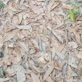 C'è un serpente tra le foglie: lo vedete?