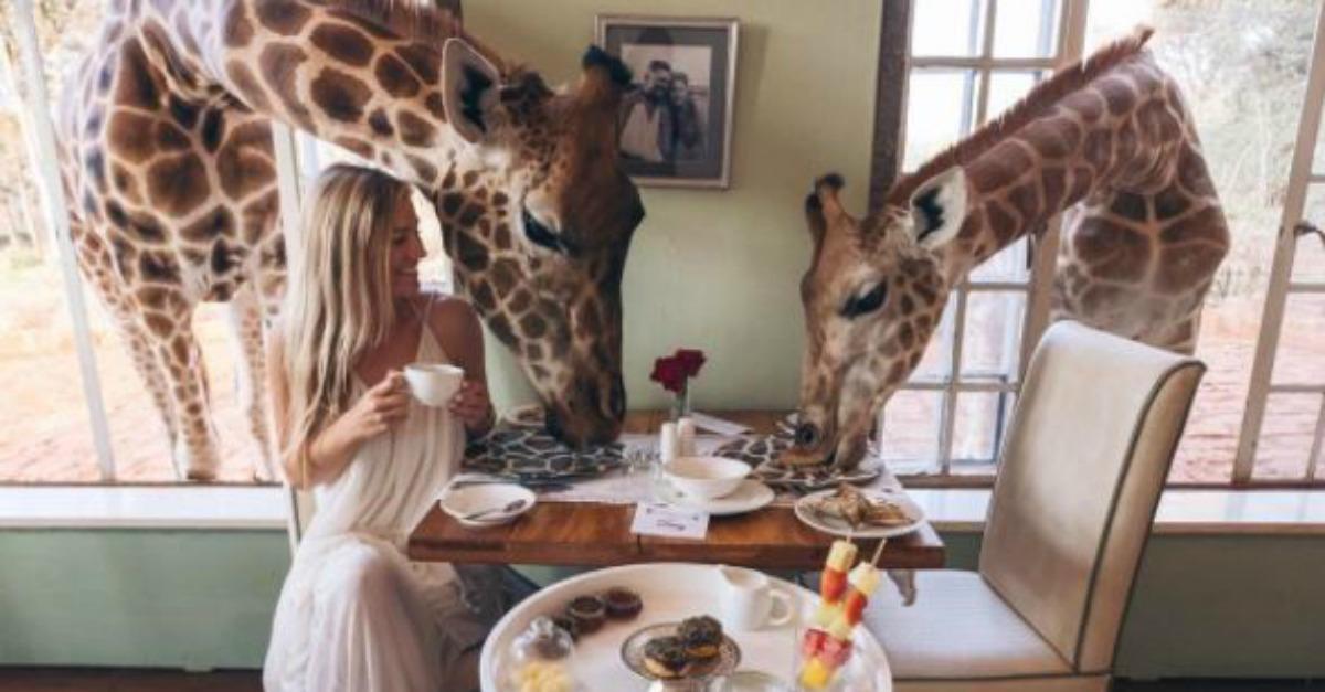 In questo hotel potete condividere la vostra colazione in giardino con le giraffe