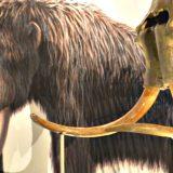 """""""Resuscitare il Mammut Lanoso dopo 10mila anni"""", la pazza idea di Harvard spiegata a Linus e Nicola"""