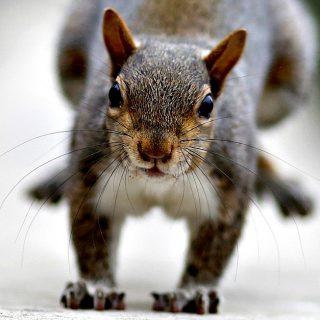 Lo scoiattolo morde i passanti: ferita anche una bimba