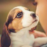 Permesso retribuito per curare il proprio cane: impiegata pubblica lo ottiene grazie alla Lav