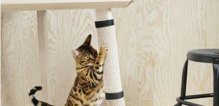 Ikea lancia la linea per animali 'Il vostro cane e il vostro gatto sono membri della famiglia'