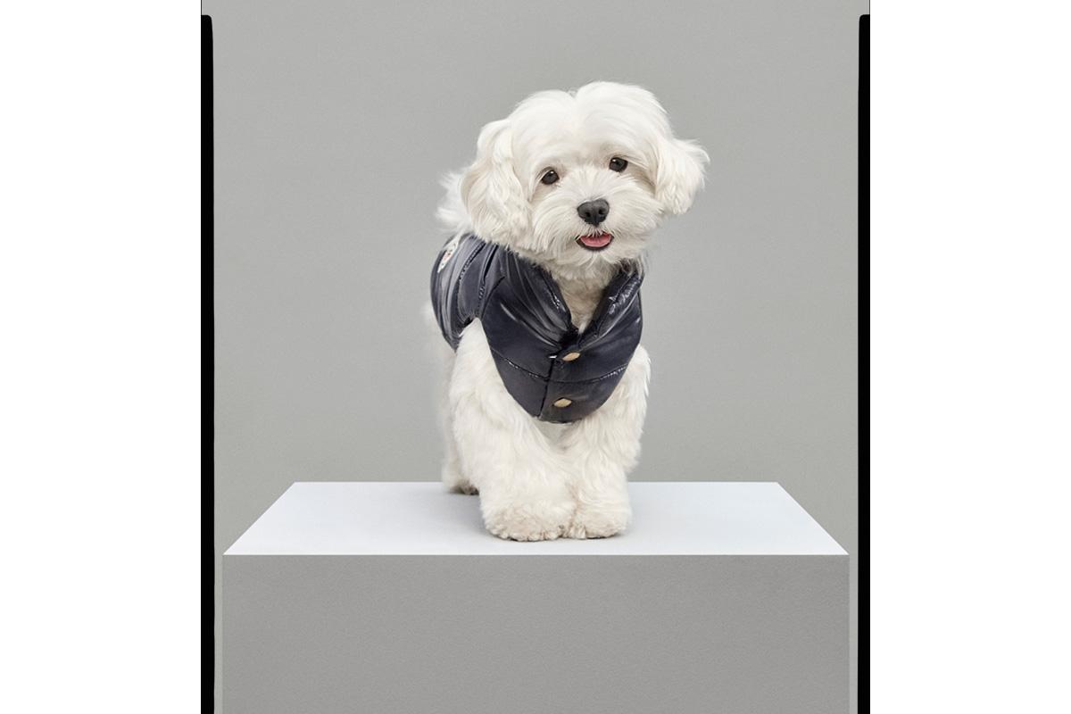 moncler cane prezzo