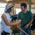 'Il contadino cerca moglie', è tempo di nuove scelte in fattoria