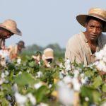 12 anni schiavo, trama e curiosità del film tratto dall'autobiografia di Solomon Northup