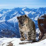Planet Earth II: il documentario dei record di BBC, in onda su Retequattro dal 23 marzo