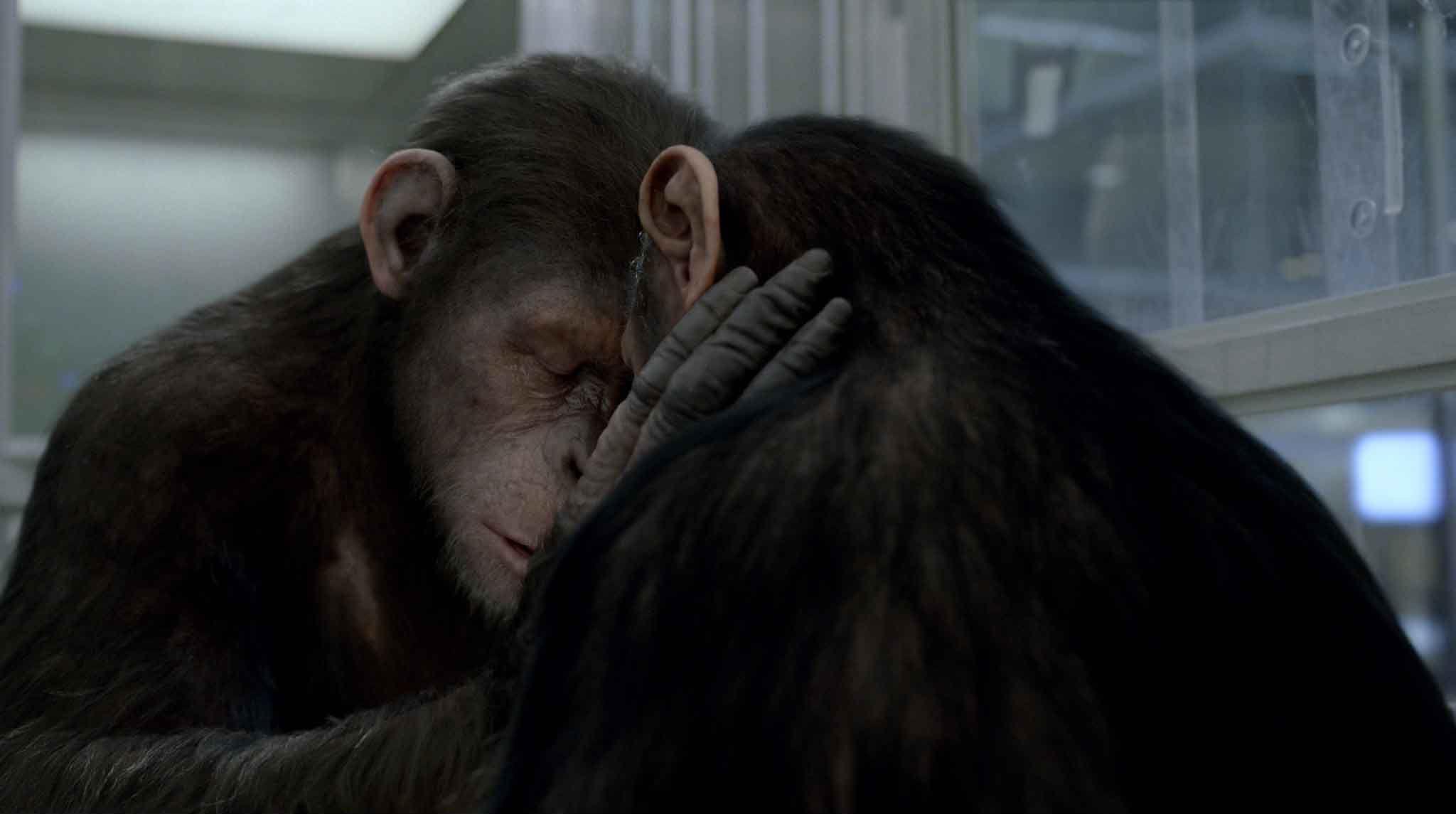 alba_pianeta_scimmie