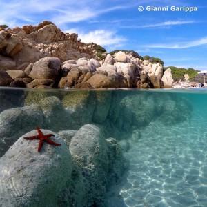 Gianni Garippa (@giannigaryp)