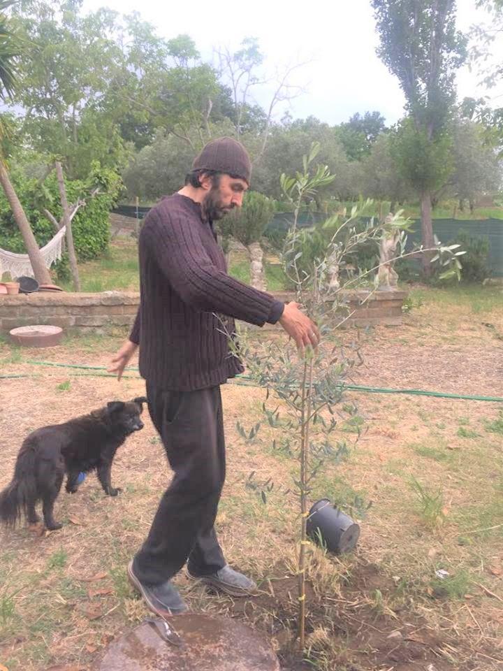 Carlo pianta un ulivo nella sua casa vicino a Bracciano
