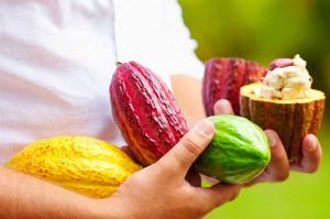 Cabosse di cacao Criollo. Coltivatrice. Foto de Visintini.