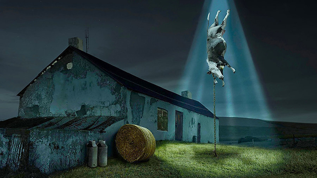 UFO e vacche