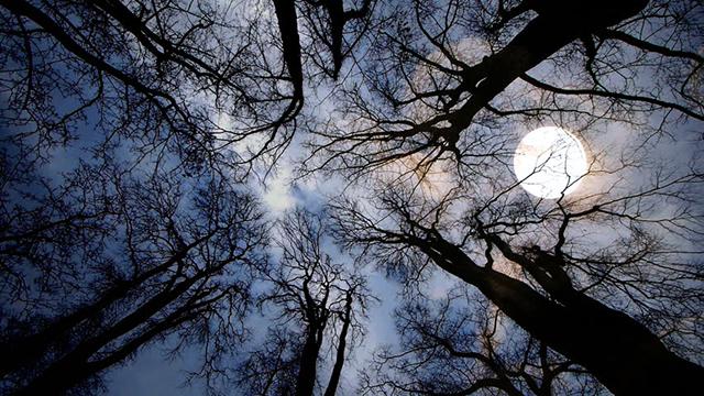luna piena nel bosco
