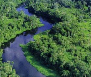 amazzonia-bali-clima-co2-foresta-kyoto-wwf
