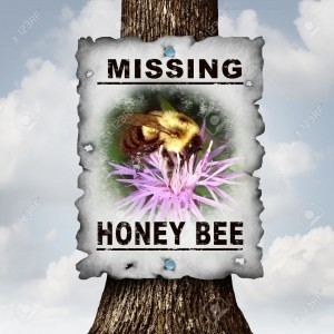 Honey Bee Missing