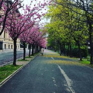 biella-natura-alberi-primavera-640x640