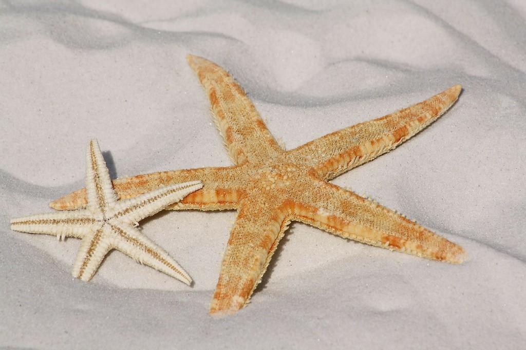 starfish-343791_1280