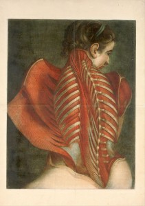 angelo-anatomico-3