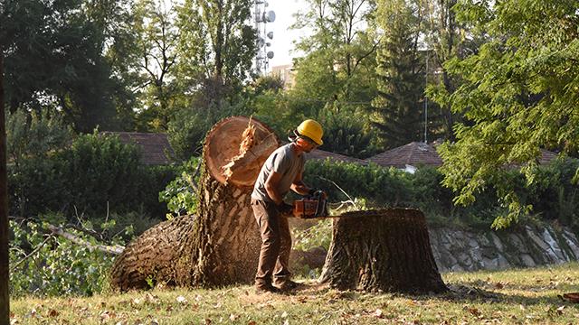 2018 08 30 Alinvoi abbattimento alberi via Verese1
