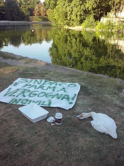 Laghetto del parco ducale comune nessuna infezione da for Vasche pesci da giardino