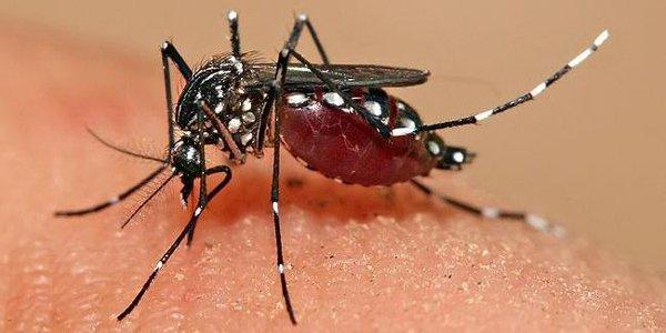 Caso sospetto di Dengue: rientrato l'allarme