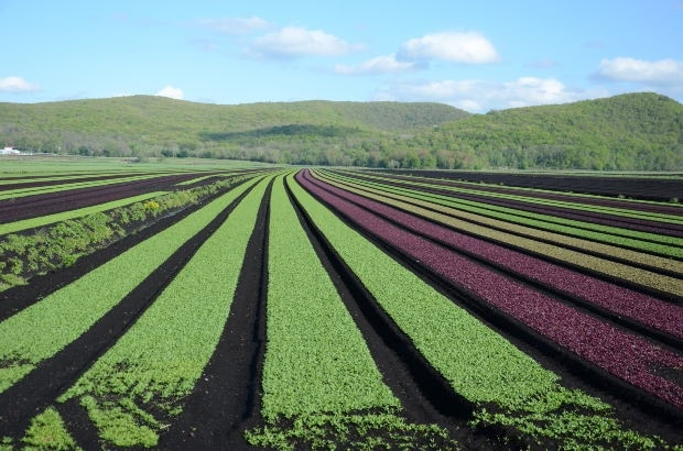 agricoltura-campi-morguefile-kconnors