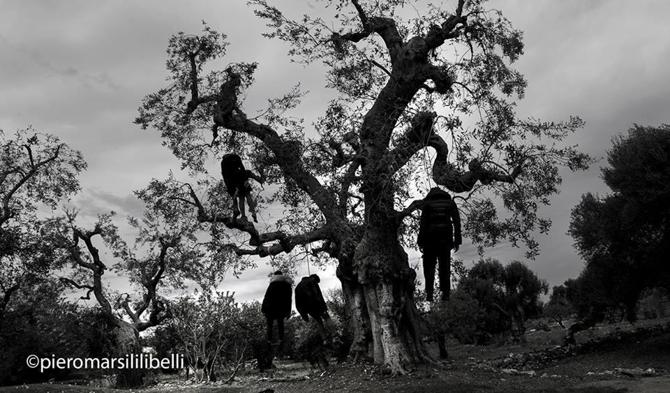 Uno scatto di Piero Marsili Libelli dedicato alla Xylella