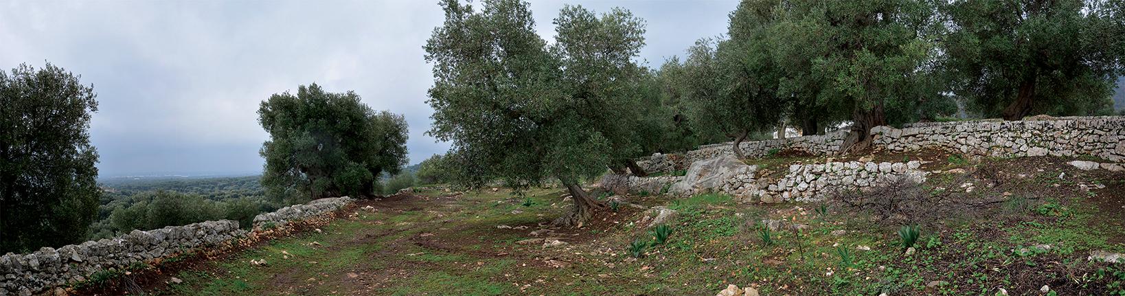 Il paesaggio archeologico tutelato_Monte Gianecchia-Cisternino (BR)