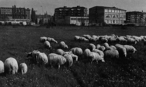 Una delle aree al centro dello scandalo urbanistico 1975 (foto Giovanni Ferraguti)