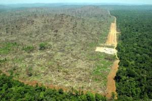 Deforestazione-Greenpeace2