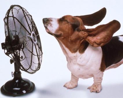 caldo-cane
