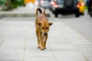 17397427_2012-rischio-di-abbandono-250-000-cani-0