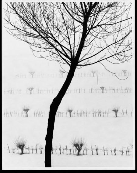 stanislaofarri_alberi