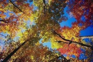 alberi-colori
