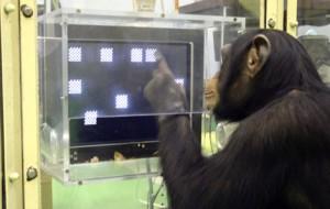 chimp-research-58