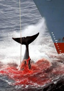 japanese-whaling