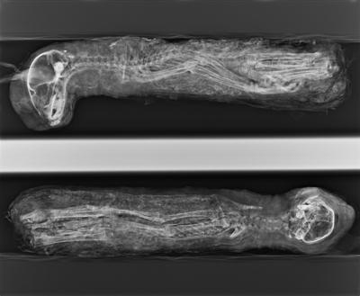 mummia_digitale