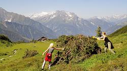 16.05.19 Zillertal (Tirolo), lavoro volontario negli alpeggi - Copia