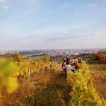 Vienna è l'unica metropoli europea con vigneti e produzione di vino