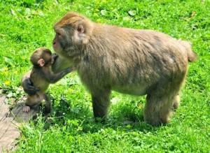 17.08.30 Villach, Landkron; Affenberg (monte delle scimmie) - Copia