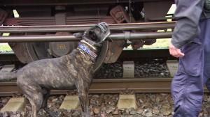 17.09.03 Controlli profughi su treni merci, cane Ebola